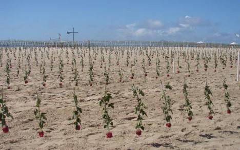 6.000 rote Rosen erinnern an die Todesopfer 2007 in Rio de Janeiro (Foto: Daniella Clark)