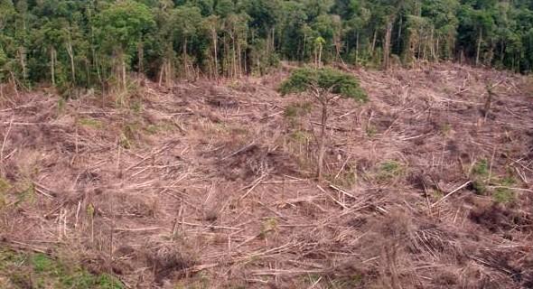 Zerstörter Regenwald in der Region Tailândia - kaum ein Baum darf stehenbleiben (Foto: Glauco Araújo/G1)