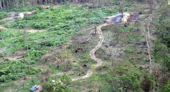 Provisorische Wege im Regenwald, auf denen die Holzkohle abtransportiert wird (Foto: Glauco Araújo/G1)