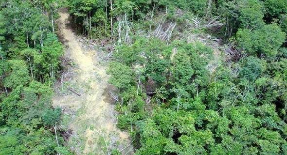 Illegale Wege im Regenwald - un links und rechts davon wird immer mehr gefällt (Foto: Glauco Araújo/G1)
