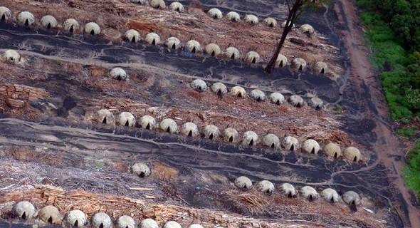 Ofen an Ofen - und alles auf illegal gerodeter Fläche - die Perversion der Zerstörung (Foto: Glauco Araújo/G1)