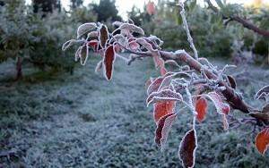 Frost im Süden Brasilien