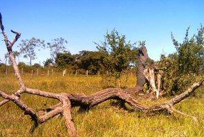 pantanal-trockenzeit-normal