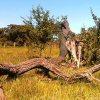 pantanal-trockenzeit-rcol