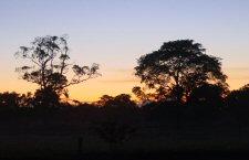 regenwald-amazonas
