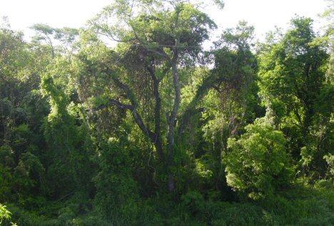 regenwald-brasilien