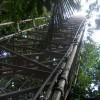 Grundsteinlegung für deutsch-brasilianischen Forschungsturm in Amazonien