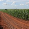 Brasilien bei internationalen Verhandlungen gegen Biopiraterie außen vor