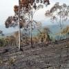 Brände bedrohen Naturschutzgebiete und Siedlungen in Brasilien