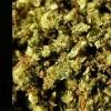 Brasilien diskutiert Legalisierung von Cannabis-Derivaten