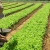 Millionen Arbeitnehmer sind in Brasilien ohne rechtliche Absicherung tätig