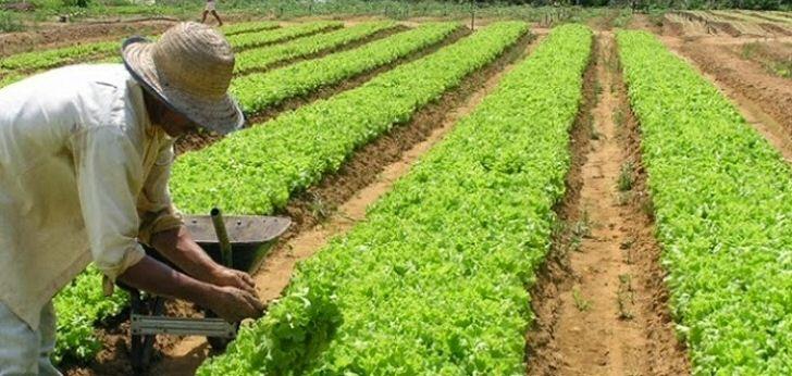 arbeiter-landwirtschaft
