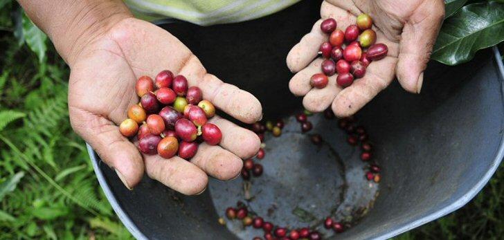 kaffee-brasil