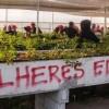 Landlosenbewegung verwüstet Gen-Labor für Eukalyptus