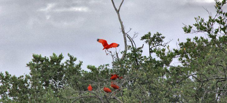 biodiversitaet-brasilien