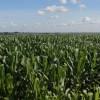 Fehlende Lagerstätten und mangelhafte Infrastruktur verteuern Brasiliens Agrarprodukte