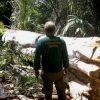 Erneut Rekordkahlschläge im Amazonas-Regenwald