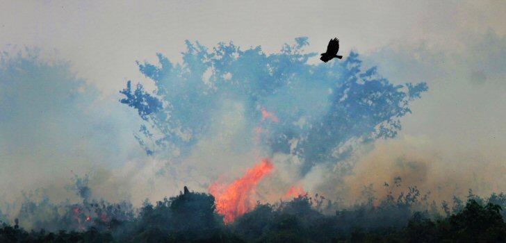queimada-amazonas