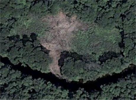 lochforest1.jpg